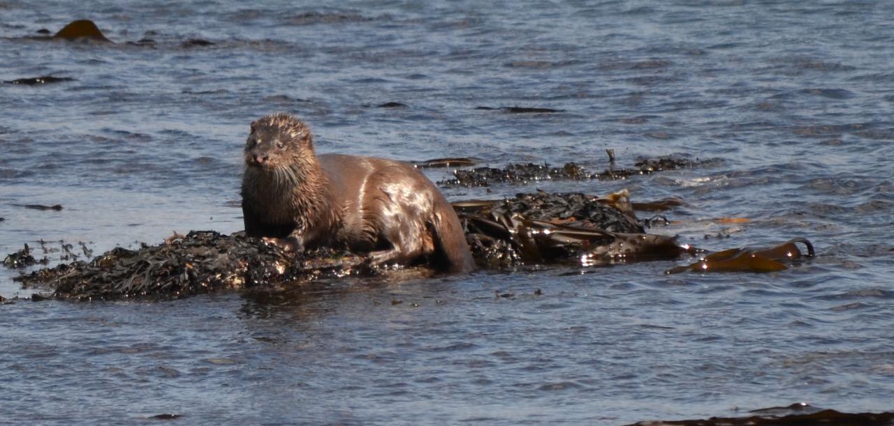otter-smaller
