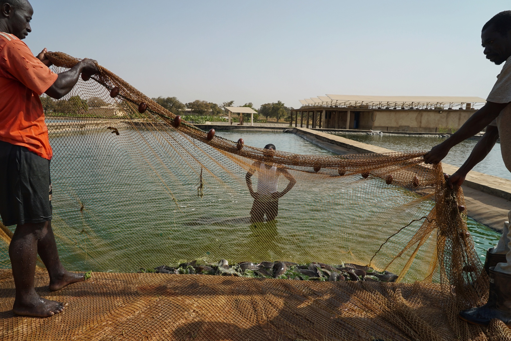 Large-scale Fish Farm catches the Sun
